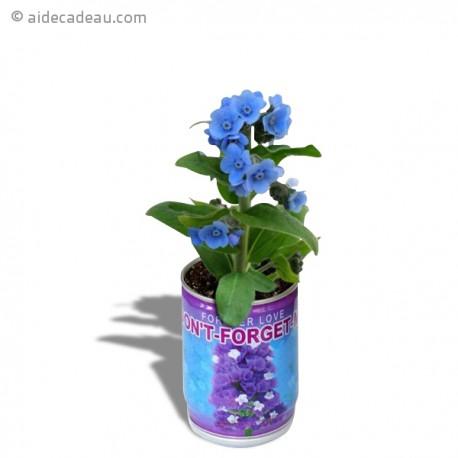 plante don 39 t forget me en canette fleurs bleues. Black Bedroom Furniture Sets. Home Design Ideas