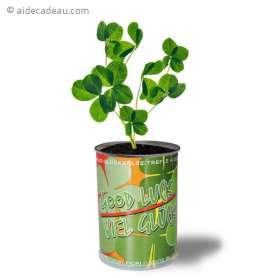 Trèfle à 4 feuilles dans une canette