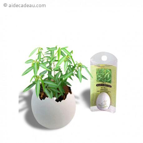 Plante dansante Aturi
