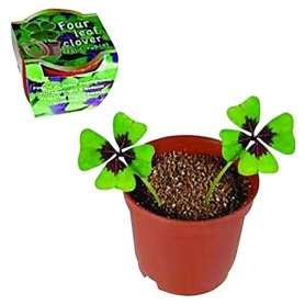 Kit trèfle à 4 feuilles à planter