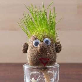 Tête cheveux à pousser herbe
