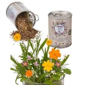 Canette de graines de fleurs des prés