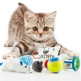 Lot de jouets pour chat